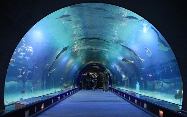 Visita guiada ciudad de las artes y las ciencias artvalencia Entradas aquarium valencia