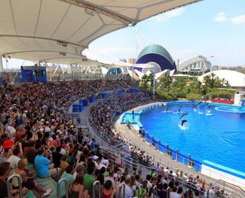 Grupos visitando el delfinario y disfrutando del espectáculo de delfines con monitores en el Oceanográfico de Valencia
