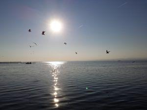 Visita con nuestro guía y disfruta de una de las puestas de sol más bonitas de España mientras das un romántico paseo en barca por el lago de la Albufera de Valencia