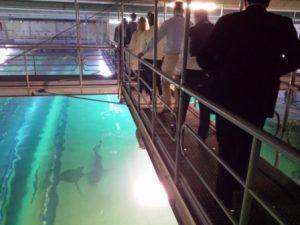 Visita para grupo VIP en el Oceanográfico de la Ciudad de las Artes y las Ciencias de Valencia, una visita diferente al Otro lado del acuario
